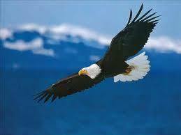 eagle's eye view