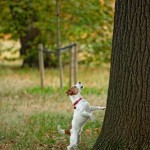 godrick, dog barking up tree